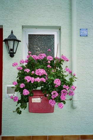 Flowers - Lautertal, Germany