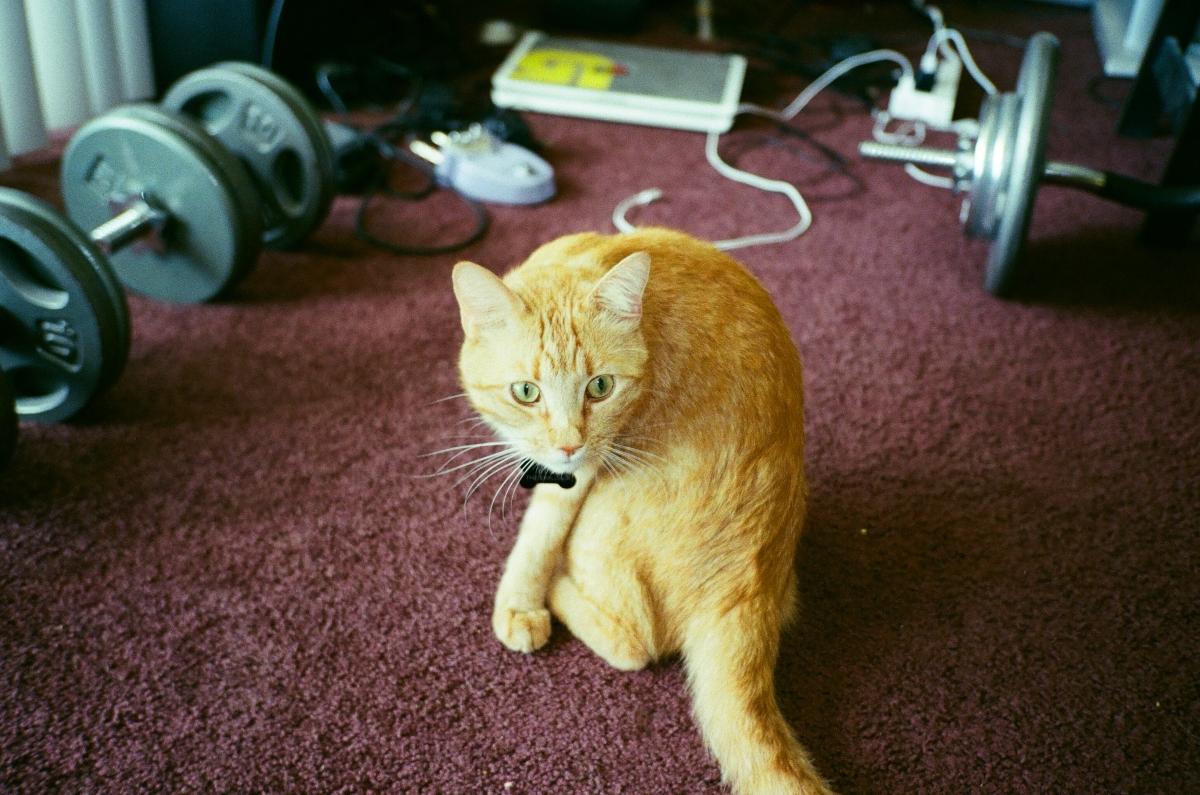 Bert the Cat